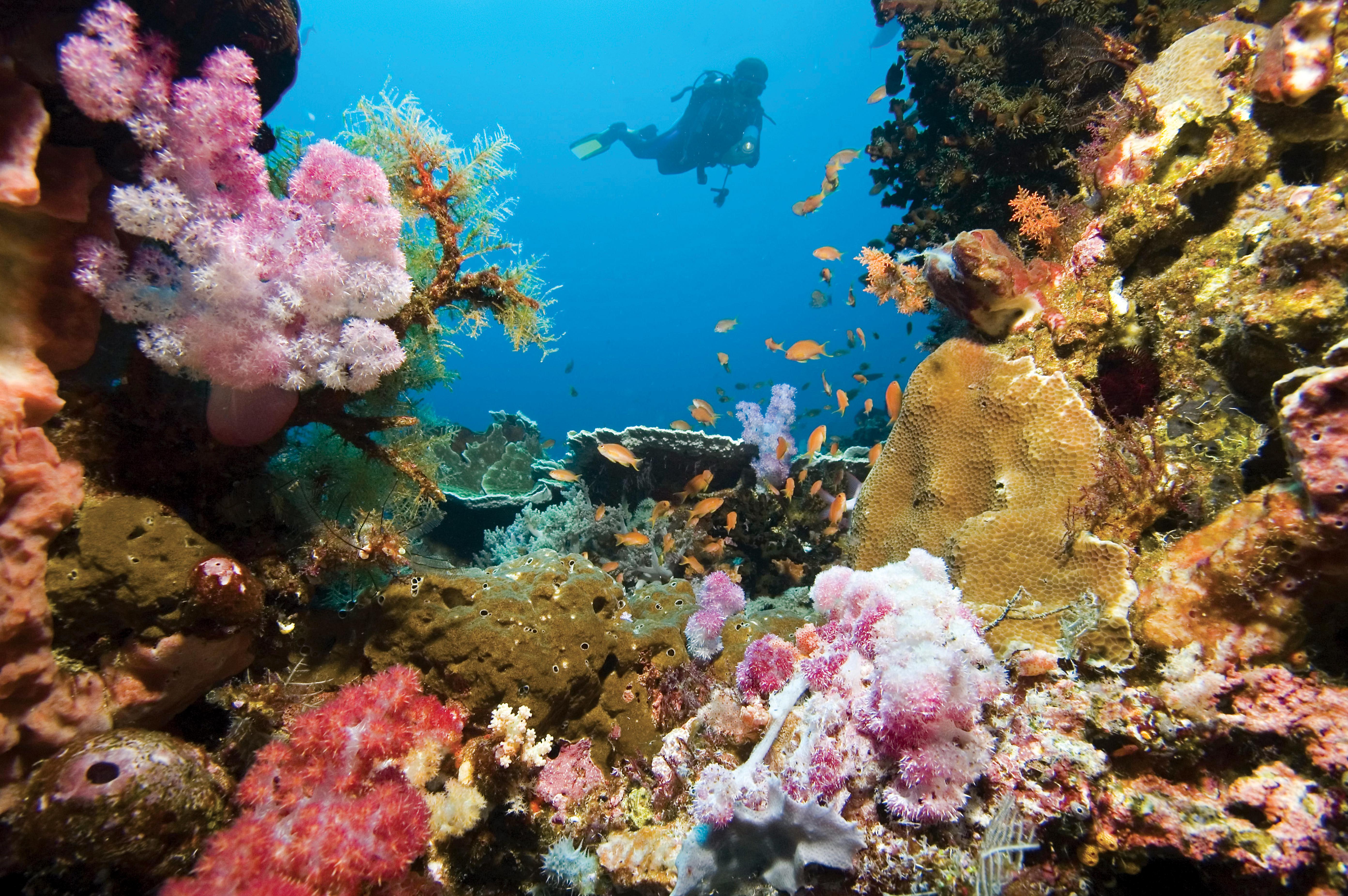 snorkel-port-denarau